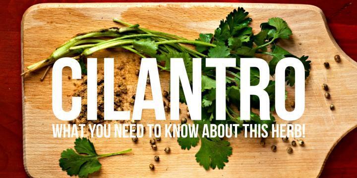 24 Cilantro Facts You Need To Know   #cilantro #coriander #foodinfo #foodfacts