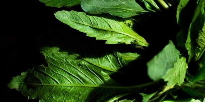 Epazote Leaves and Recipe Ideas by @SpicieFoodie | #MexicanFood #epazote #herbs
