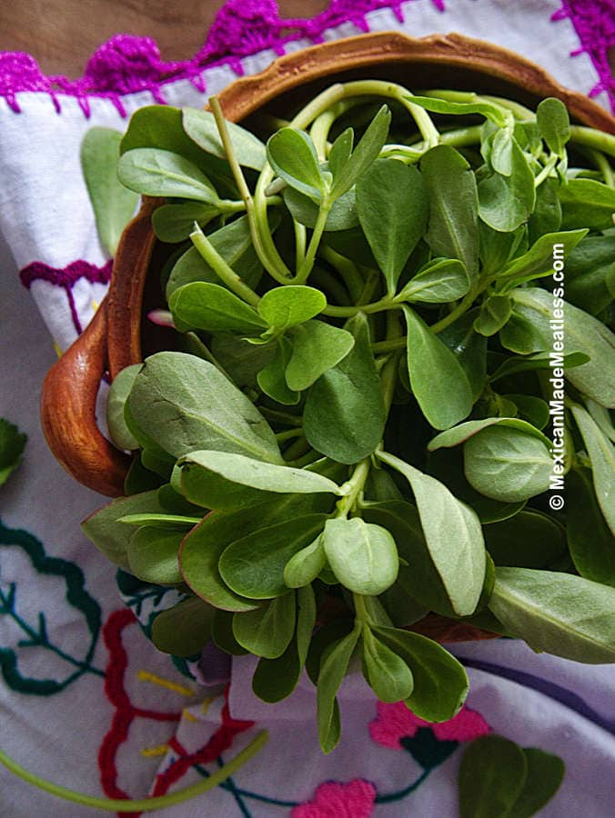 Fresh verdolagas purslane for cooking